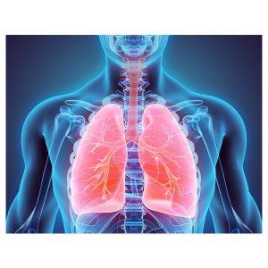 Gastroenterology & Respiratory